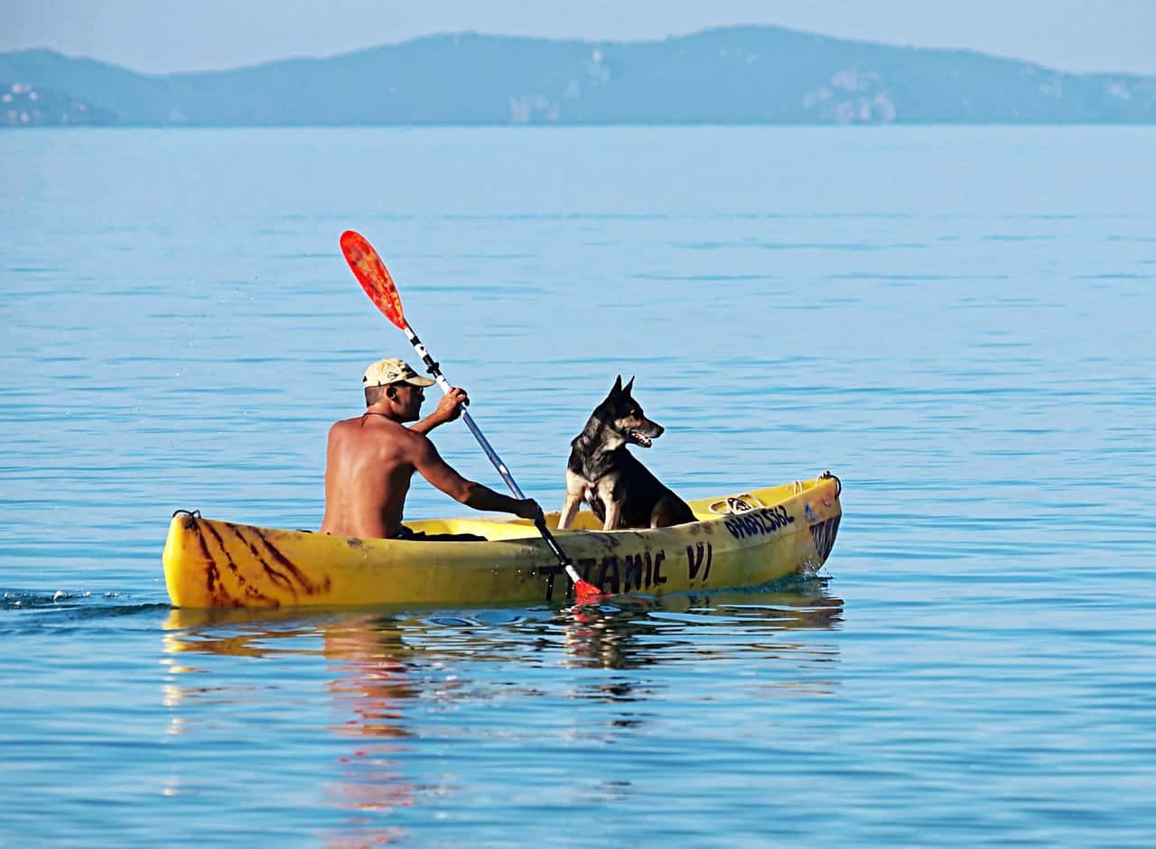 Dog in a Kayak