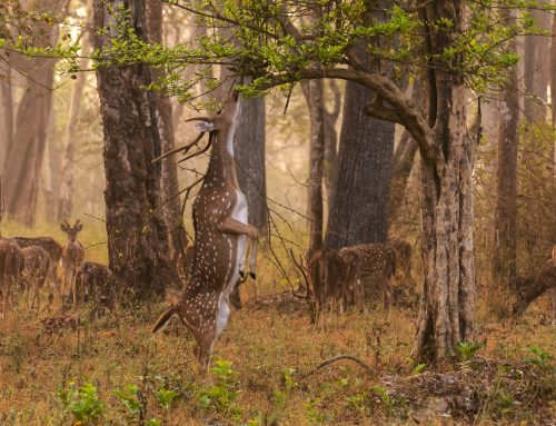 The Best Practices for Getting the Most Out of Your Deer Feeder