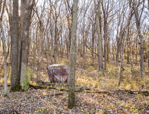 Best Practices for Hunting from a Ground Blind