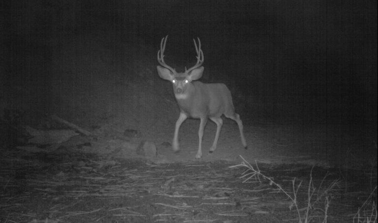 Night Deer Hunting